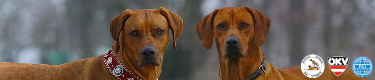 Rhodesian Ridgebacks of Bahira's Ridges